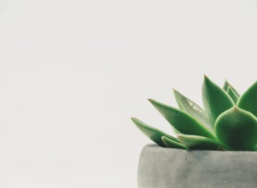Why every office needs a succulent