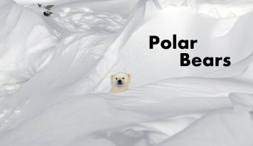 An intimate look into the life of a polar bear